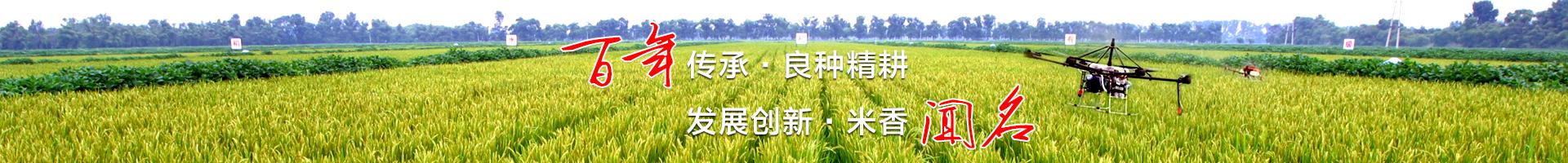 稻米基本知识